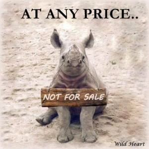 rhino not sale