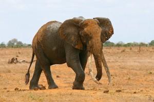 Elefante por :MArC-OH
