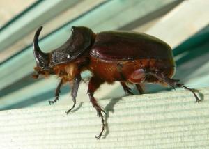 Escarabajo por Eddy Van 3000