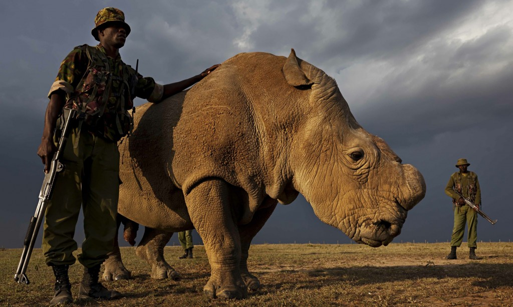 Photograph: Brent Stirton/National Geographic/WENN.com