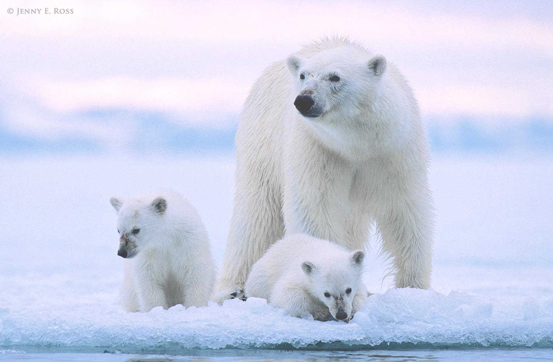 Northern Nordaustlandet, Svalbard Archipelago, Arctic Ocean, Norway.